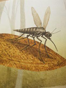 Die feinfühlige Mücke