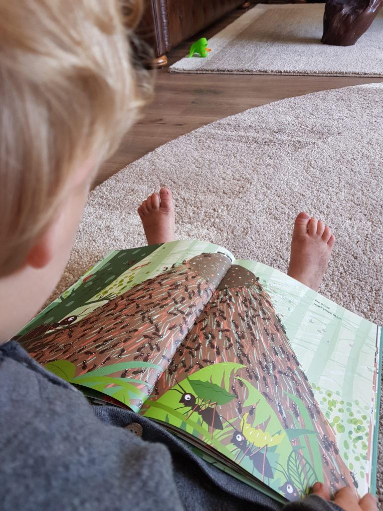 Junge sieht sich ein Bilderbuch an. Vorlesebücher für Jungs